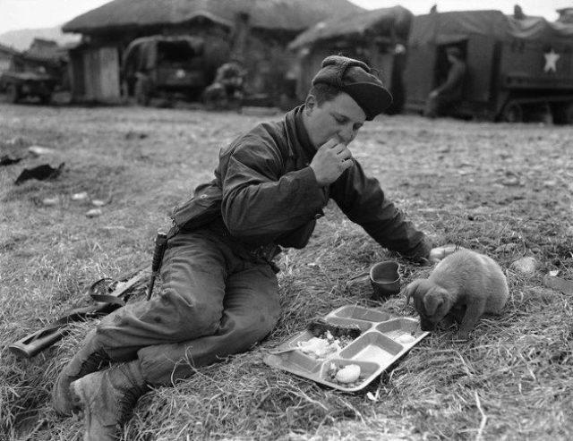 Soldado Dick L. Powell divide sua refeição com um cachorrinho (Guerra da Coreia, 1951)