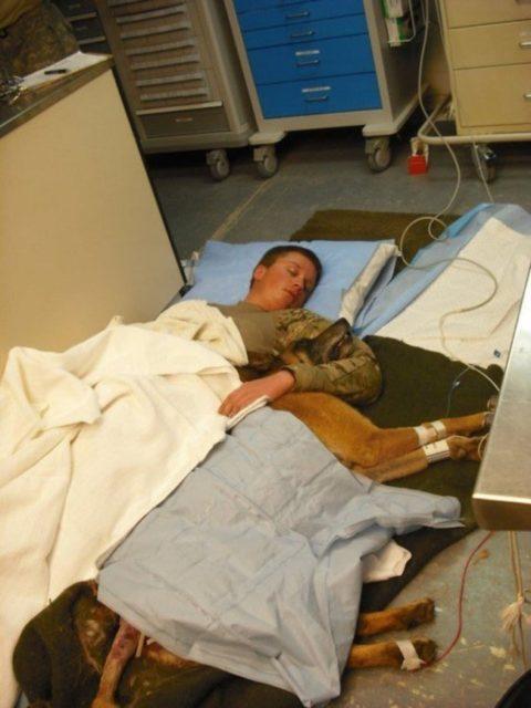 Um soldado e seu cachorro se recuperam no chão de um hospital (Guerra do Afeganistão, 2011)
