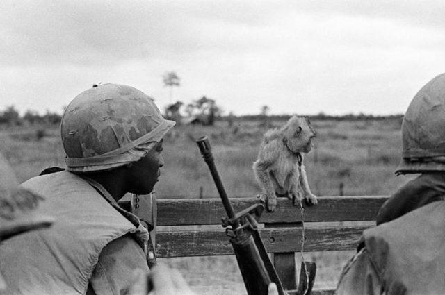 Soldado americano olhando um macaco