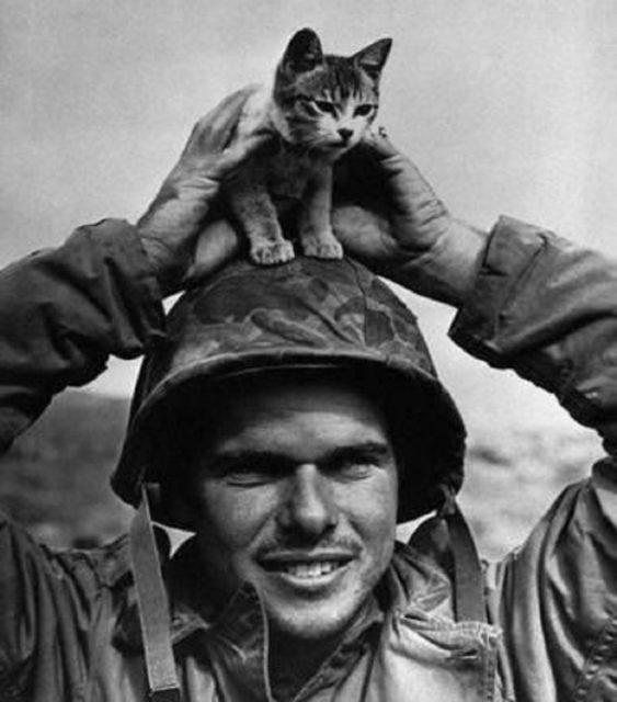 Um Soldado segurando um gatinho em Iwo Jima