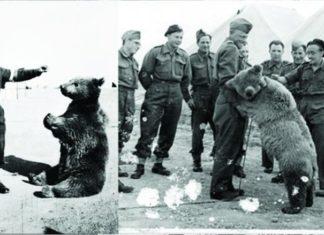 Wojtek – O Urso do Exercito Polonês